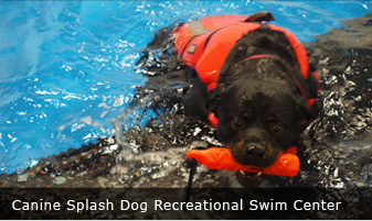 CANINE SPLASH DOG RECREATIONAL SWIM CENTER Buffalo, New York