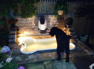 Finley, the Barbet, checking out his new bone-shaped pool by night.