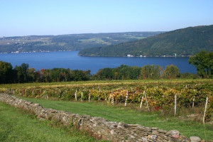 One of the many vineyards dotting the Finger Lakes.